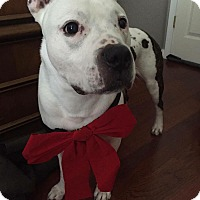 Adopt A Pet :: Carmine - Chicago, IL