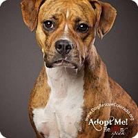 Adopt A Pet :: Annie - Aurora, CO