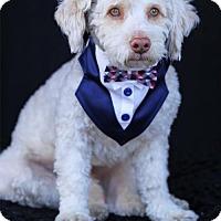Adopt A Pet :: Elton - SAN PEDRO, CA