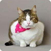 Adopt A Pet :: Nila - Arlington/Ft Worth, TX