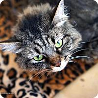 Adopt A Pet :: Isla - Tucson, AZ