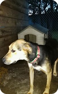 Shepherd (Unknown Type) Mix Dog for adoption in springtown, Texas - Roxie aka Daisy