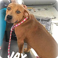 Adopt A Pet :: Jax - Jacksonville, FL