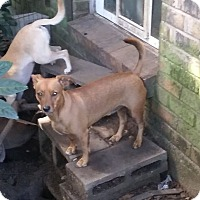 Adopt A Pet :: Cooper - Providence, RI