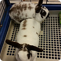 Adopt A Pet :: Mocha - Chippewa Falls, WI