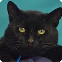 Adopt A Pet :: Biscuit - Visalia, CA