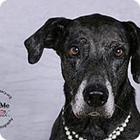 Adopt A Pet :: Nellie - Cincinnati, OH