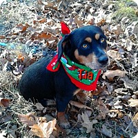 Adopt A Pet :: Tia - Princeton, KY