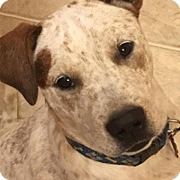 Adopt A Pet :: Marley - Aurora, CO