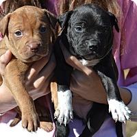 Adopt A Pet :: Twister - Board Game Litter - Acworth, GA