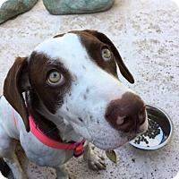 Adopt A Pet :: Ada - Davie, FL