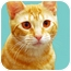 Photo 2 - Domestic Shorthair Cat for adoption in Encinitas, California - Alice