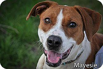 Terrier (Unknown Type, Medium) Mix Dog for adoption in Jackson, Mississippi - Mayesie