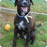 Adopt A Pet :: Artie - Pending! - kennebunkport, ME