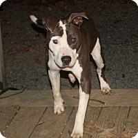 Adopt A Pet :: Sheruff - Homer, NY