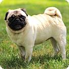 Adopt A Pet :: KIKI