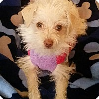 Adopt A Pet :: Marci - Alta Loma, CA