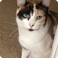 Adopt A Pet :: Josephine - Marietta, GA