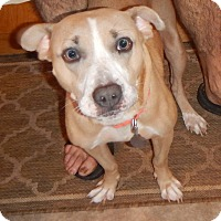 Adopt A Pet :: Betsy - Foster Home Needed - Grovertown, IN