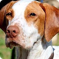 Adopt A Pet :: PETEY(PRISON TRAINING STUDENT! - Wakefield, RI