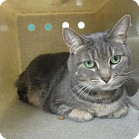 Adopt A Pet :: KITTY - Reno, NV