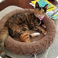 Adopt A Pet :: Precious - Fayetteville, GA