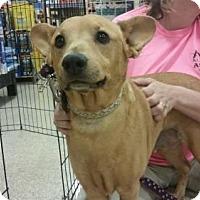 Adopt A Pet :: Doc - Glendale, AZ