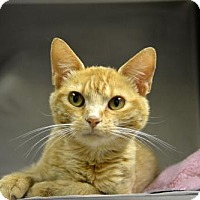 Adopt A Pet :: Billy the Kid - Versailles, KY