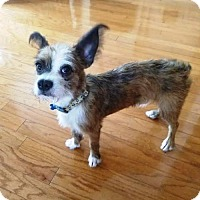 Adopt A Pet :: Larry - Houston, TX