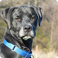 Adopt A Pet :: Little Bear - Freeport, IL