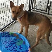 Shepherd (Unknown Type) Mix Dog for adoption in Penngrove, California - Inga