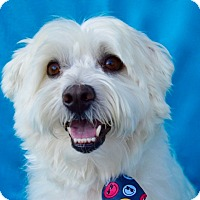 Adopt A Pet :: Buckley - Irvine, CA