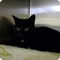 Adopt A Pet :: Bridget - Elyria, OH