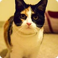 Adopt A Pet :: Cleo - Morgantown, WV