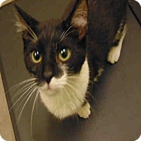 Adopt A Pet :: Patches - St. Cloud, FL