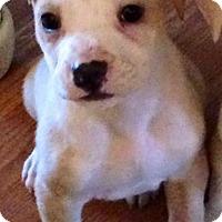 Adopt A Pet :: Tayzer - Boston, MA