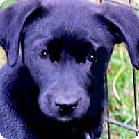 Adopt A Pet :: MISS PRESLEY(LITTLE CUDDLER!!) - Wakefield, RI