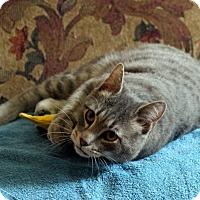 Adopt A Pet :: Lenny - Gaithersburg, MD