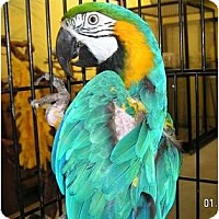 Macaw for adoption in Edgerton, Wisconsin - Charlie
