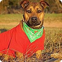 Adopt A Pet :: Bonnie aka Stubby - Albany, NY