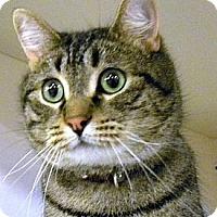 Adopt A Pet :: Aladdin - Green Bay, WI