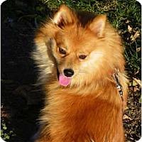 Adopt A Pet :: CERA - Hesperus, CO