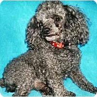 Adopt A Pet :: Topper - Mooy, AL
