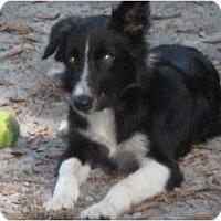 Adopt A Pet :: Wrigley - Nokomis, FL