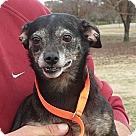 Adopt A Pet :: Ester
