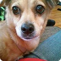 Adopt A Pet :: Remy - West Deptford, NJ