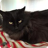 Adopt A Pet :: Tomi - Topeka, KS