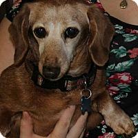Adopt A Pet :: Heidi - Marcellus, MI