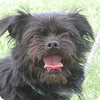 Adopt A Pet :: Danny Boy - Turlock, CA