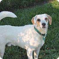 Adopt A Pet :: Hawkeye - Pittsburg, KS
